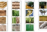 bitkisel lifler
