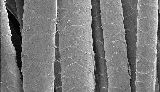 Yün mikroskop görüntüsü